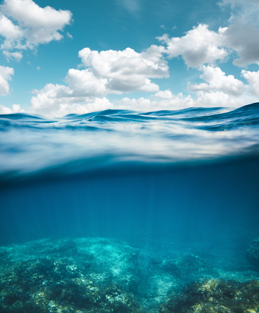 Coral - Cnidarian「Underwater」:スマホ壁紙(16)