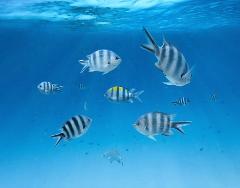 Fish「Underwater」:スマホ壁紙(16)