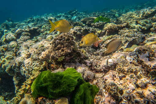 The Nature Conservancy「Underwater photography of the Great Barrier Reef」:スマホ壁紙(12)