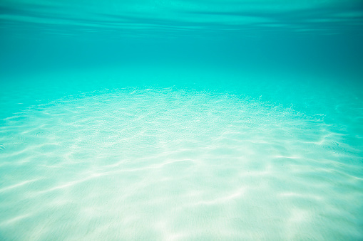Shallow「underwater seascape with white sand bottom in the Caribbean」:スマホ壁紙(4)