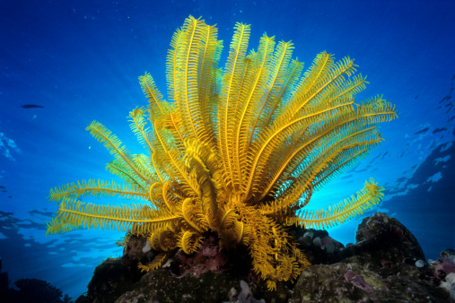 Frond「Underwater plant」:スマホ壁紙(4)
