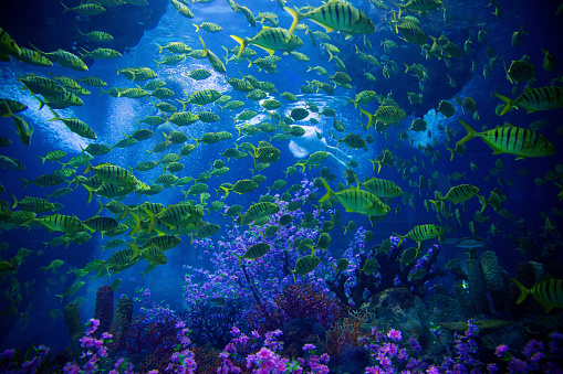 Diving Into Water「Underwater Scene With Reef And Tropical Fish」:スマホ壁紙(17)