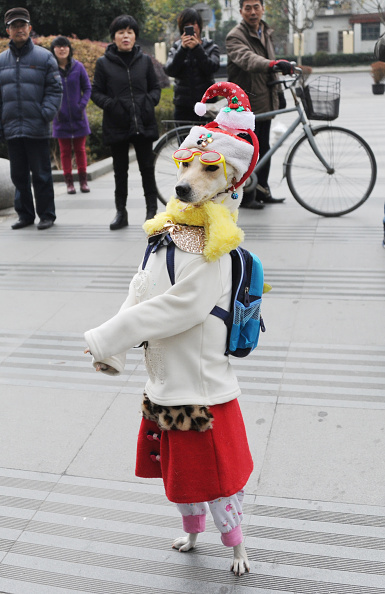 Clothing「Dog Wearing Clothes Walks On Shanghai Pudong New District」:写真・画像(16)[壁紙.com]