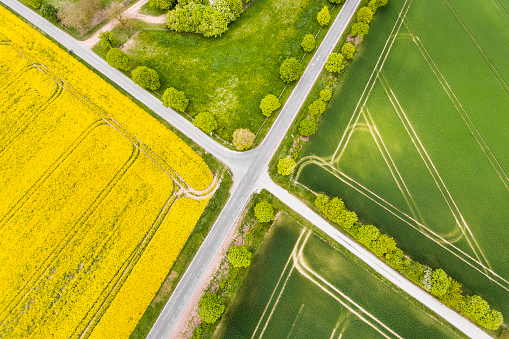 Farm「Canola and wheat fields in spring - aerial view」:スマホ壁紙(0)