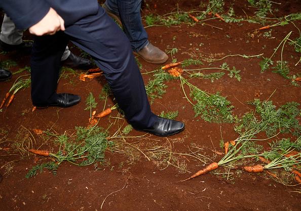 Carrot「Scott Morrison Campaigns In Tasmania」:写真・画像(19)[壁紙.com]