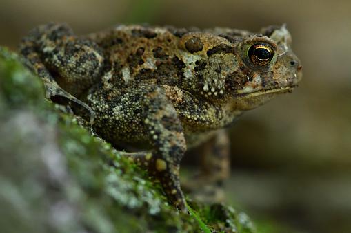 Animal Ear「Toad in woods」:スマホ壁紙(3)