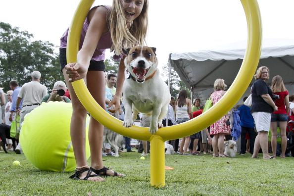 Alabaster「Beneful Dream Dog Park Unveil Event」:写真・画像(4)[壁紙.com]