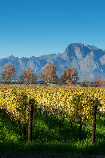 South Africa「Autumn Cape Winelands Scene with mountains」:スマホ壁紙(10)