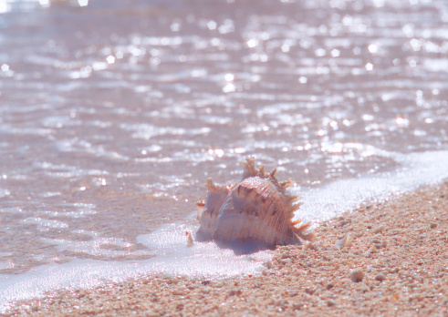 Northern Mariana Islands「Beach」:スマホ壁紙(14)