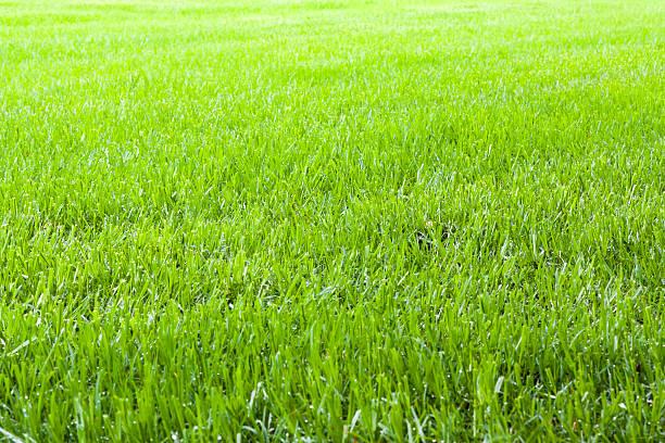 Field of summer green grass, copy space:スマホ壁紙(壁紙.com)