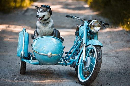 Motorcycle「Malamute puppy in a motorcycle sidecar」:スマホ壁紙(18)