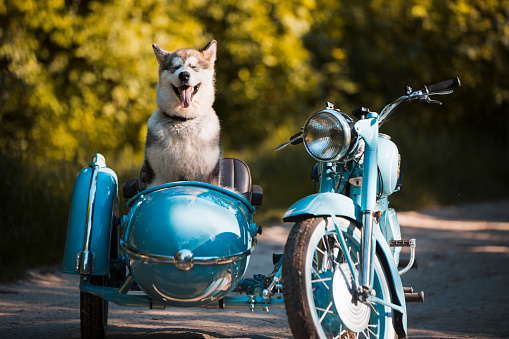 Motorcycle「Malamute puppy in a motorcycle sidecar」:スマホ壁紙(15)