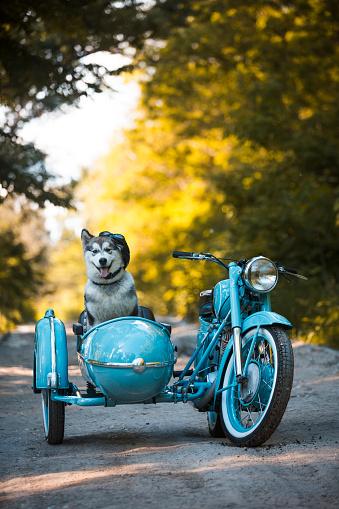 Motorcycle「Malamute puppy in a motorcycle sidecar」:スマホ壁紙(1)