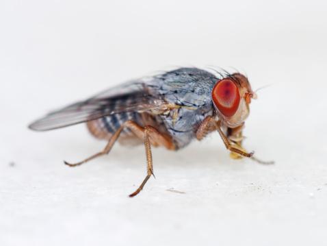 Ugliness「Fruit fly 04」:スマホ壁紙(13)