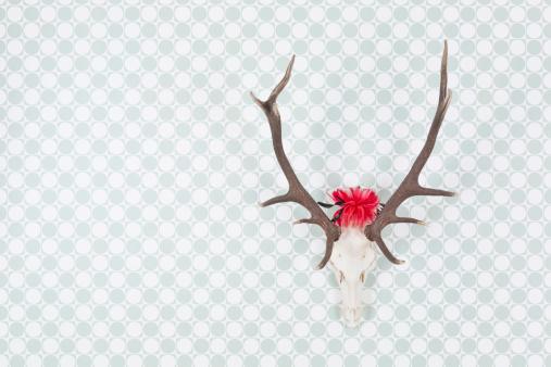 質感「Germany, Freiburg, Deer antler with headdress hanging on wall, close up」:スマホ壁紙(4)