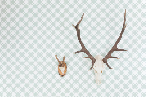 ガラス「Germany, Freiburg, Deer antlers hanging on wall, close up」:スマホ壁紙(19)