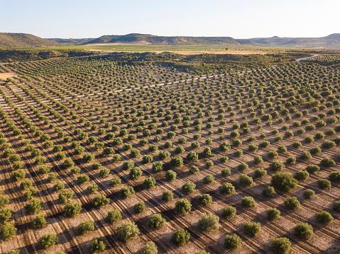 Ecosystem「Olive plantation in Spain」:スマホ壁紙(11)