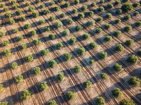 Grove「Olive plantation in Spain」:スマホ壁紙(13)