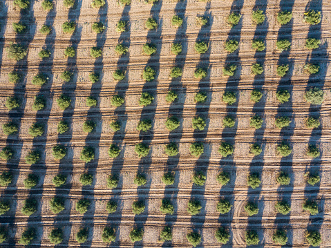 Grove「Olive plantation in Spain」:スマホ壁紙(7)