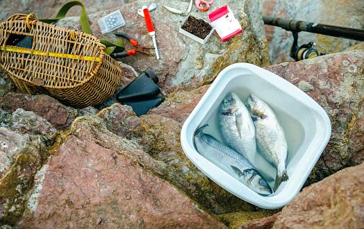 Sea Bream「Bucket with caught fish and fishing equipment on rock」:スマホ壁紙(5)