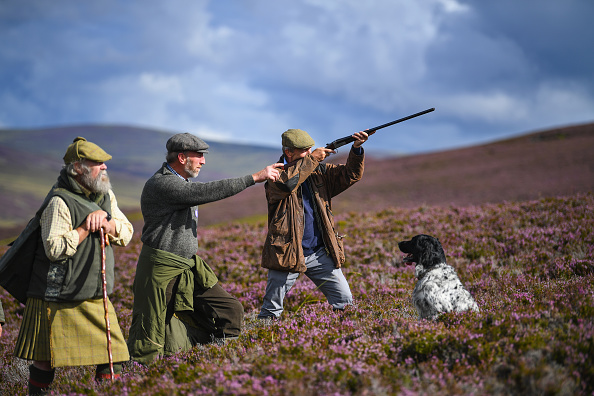 animal「The Glorious 12th Marks The Official Start Of Grouse Shooting Season」:写真・画像(18)[壁紙.com]