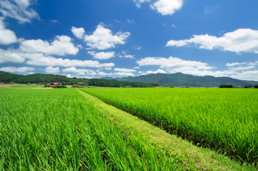 里山「Rice Paddy」:スマホ壁紙(16)