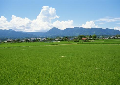 Japan「Rice paddy」:スマホ壁紙(19)