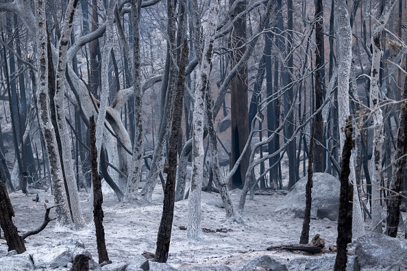 Sequoia National Forest「Windy Fire Forces Evacuations In Central California」:写真・画像(7)[壁紙.com]