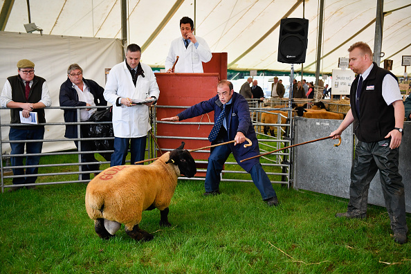 Finance and Economy「The Annual Kelso Ram Sale」:写真・画像(16)[壁紙.com]
