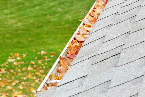 Sugar maple「Residential Home Roof Gutter Filled With Autumn Leaves」:スマホ壁紙(4)