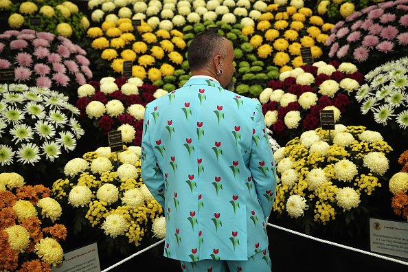 Chrysanthemum「Chelsea Flower Show 2014 - Press Day」:写真・画像(15)[壁紙.com]