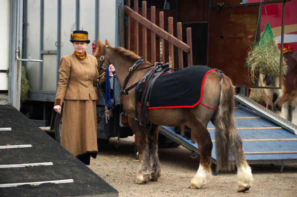 Vertebrate「Riders Display Their Horses And Carriages During The London Harness Horse Parade」:写真・画像(13)[壁紙.com]