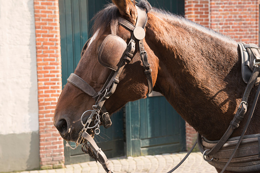 Horse-drawn carriage「Headshot of horse-drawn carriage - Bruges, Belgium」:スマホ壁紙(9)