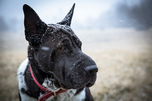 Dog「Headshot of dog during snowfall, Johnstown, Ohio, USA」:スマホ壁紙(6)