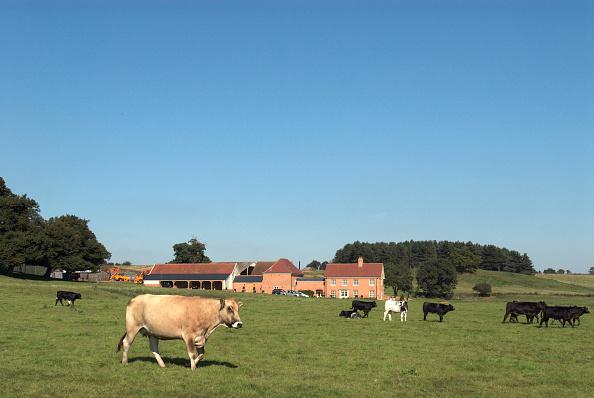 Pasture「New farm development, Ipswich, United Kingdom」:写真・画像(7)[壁紙.com]
