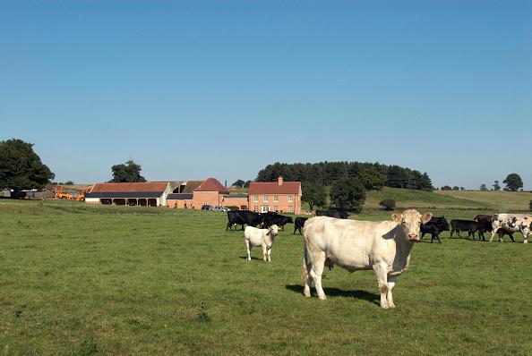 Copy Space「New farm development, Ipswich, United Kingdom」:写真・画像(16)[壁紙.com]