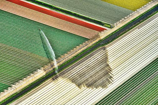Netherlands「Holland, Aerial view of water spraying on tulip fields」:スマホ壁紙(10)