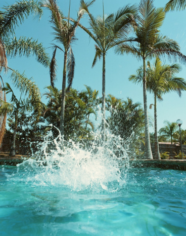 Taking the Plunge「Splash on surface of swimming pool, palm trees in background」:スマホ壁紙(12)