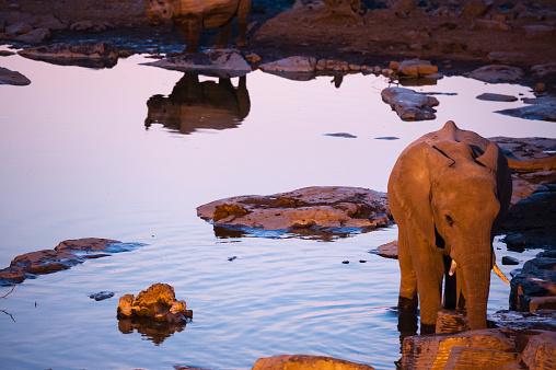 象「Elephant and rhino at lit waterhole, Etosha National Park, Namibia」:スマホ壁紙(7)
