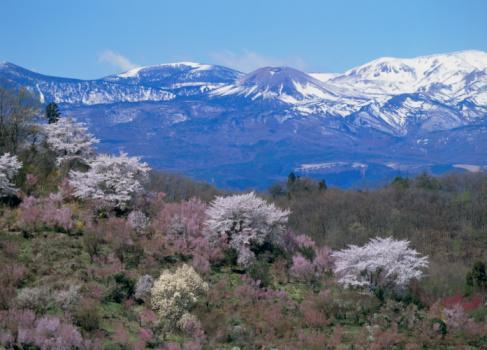 Hanami「Hanami Mountain, Fukushima, Fukushima, Japan」:スマホ壁紙(11)