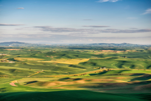 Grove「Palouse Rolling Hills (wheat)」:スマホ壁紙(3)