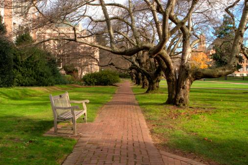 Footpath「University of Washington Bench」:スマホ壁紙(7)