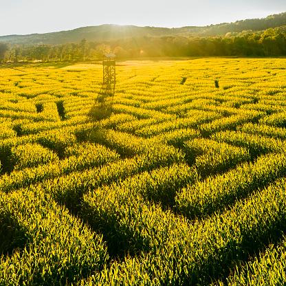 Pennsylvania「The huge Halloween's Corn Maze in Pennsylvania, Poconos Region」:スマホ壁紙(5)