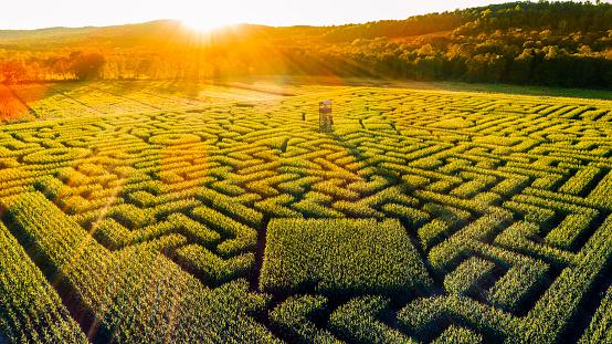 Pennsylvania「The huge Halloween's Corn Maze in Pennsylvania, Poconos Region」:スマホ壁紙(12)