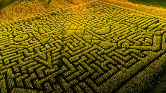 お祭り「ペンシルベニア州ポコノス地域に巨大なハロウィーンのトウモロコシ迷路」:スマホ壁紙(11)