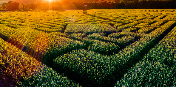 お祭り「ペンシルベニア州ポコノス地域に巨大なハロウィーンのトウモロコシ迷路」:スマホ壁紙(13)