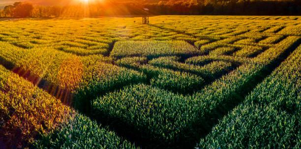 The huge Halloween's Corn Maze in Pennsylvania, Poconos Region:スマホ壁紙(壁紙.com)