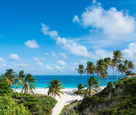 Barbados「Bottom Bay Beach and Palm Trees in Barbados」:スマホ壁紙(16)