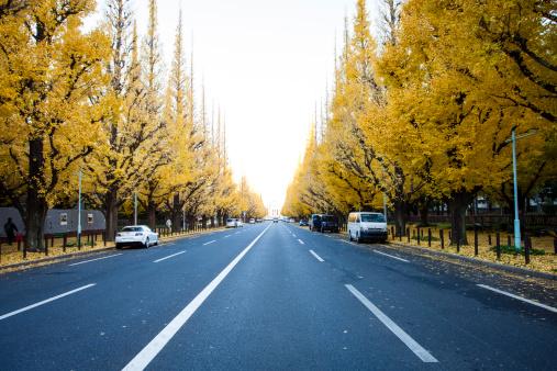イチョウ「Ginkgo Avenue, Icho Namiki in Tokyo. Autumn」:スマホ壁紙(2)