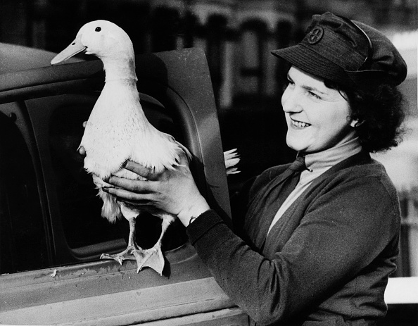 One Animal「A Duck Named America」:写真・画像(11)[壁紙.com]